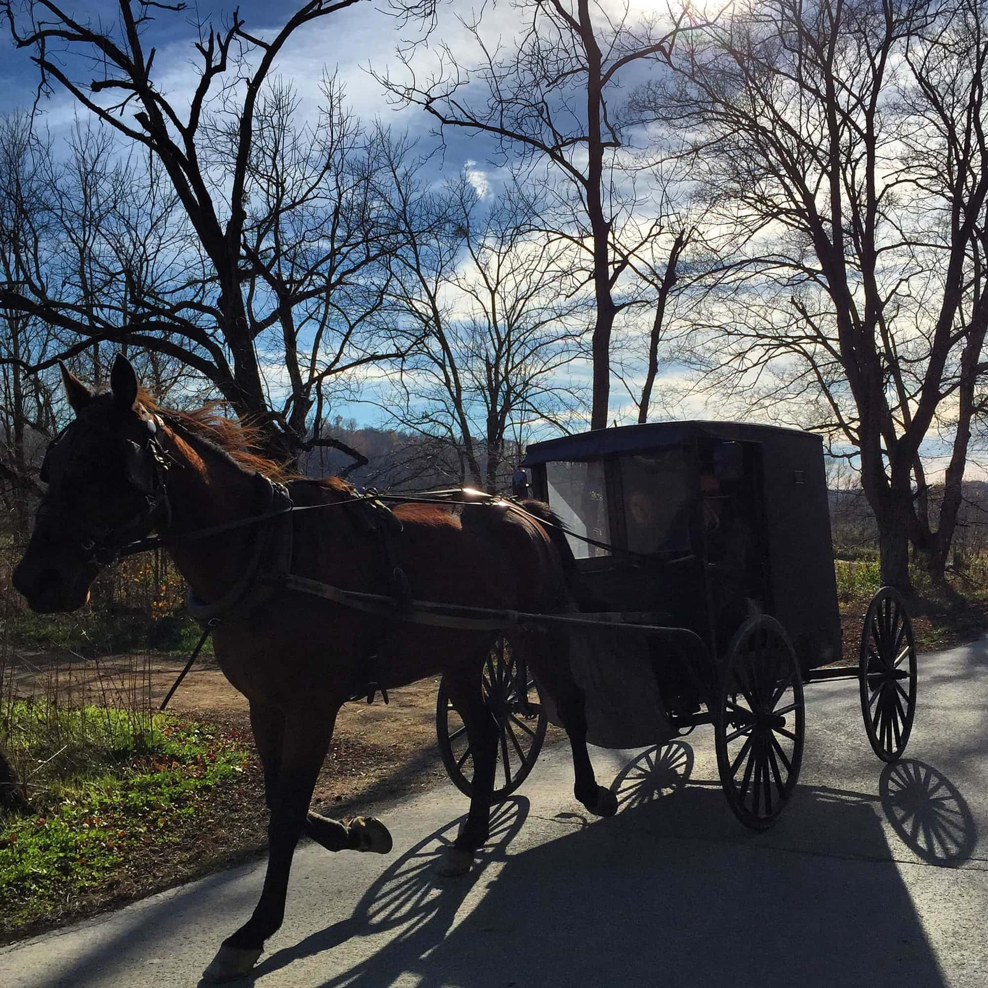 horse and buggy casey county ky