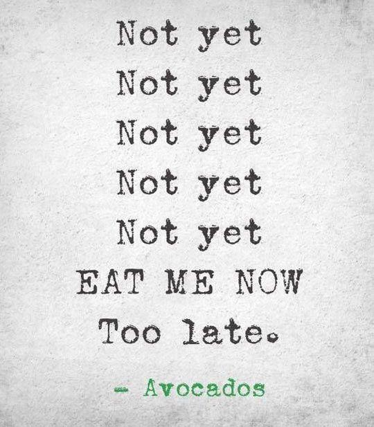 avocados - funny vegan and food memes very veganish