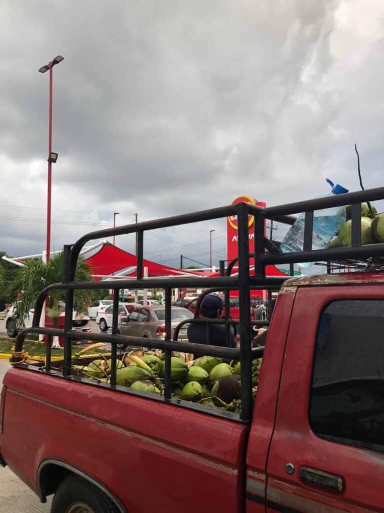 fresh coconuts at super aki tulum on way to cenote tankach-ha in coba mexico