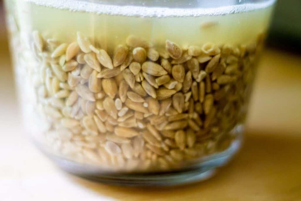 soaking sunflower seeds
